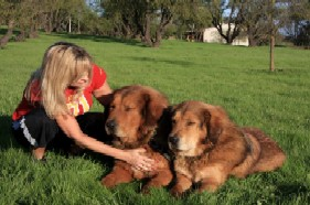 Tibetan Mastiff Trainers in Garden Grove-image.