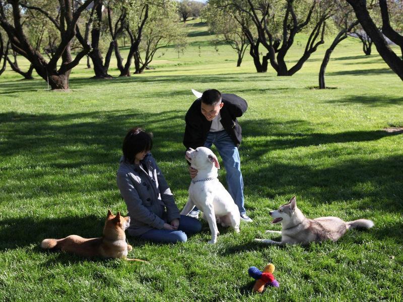 Reward obedience training in Sacramento area orchard-image.
