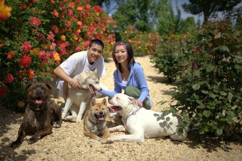 Pit Bull, Shiba Inu, Siberian Husky and Bulldog in Sacramento dog training-image.