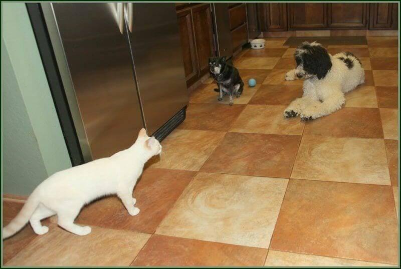 cats and dog training method
