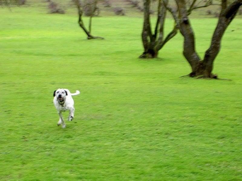 best dog training in sacramento