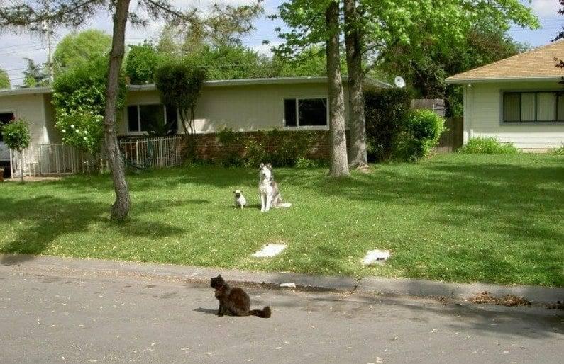 service dogs sacramento
