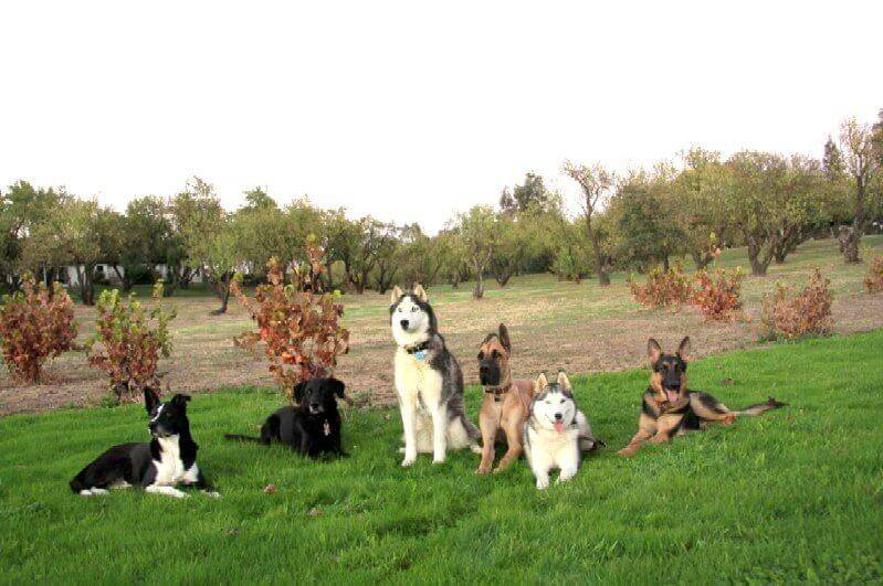 psychiatric dog trainers sacramento