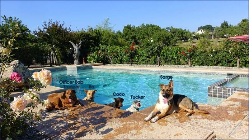 German Shepherd Dog Training Sacramento