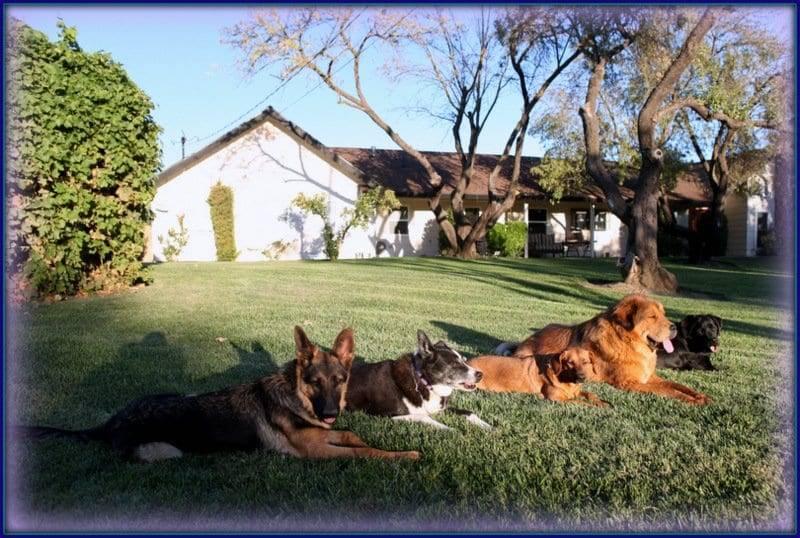 german shepherd dog training sacramento