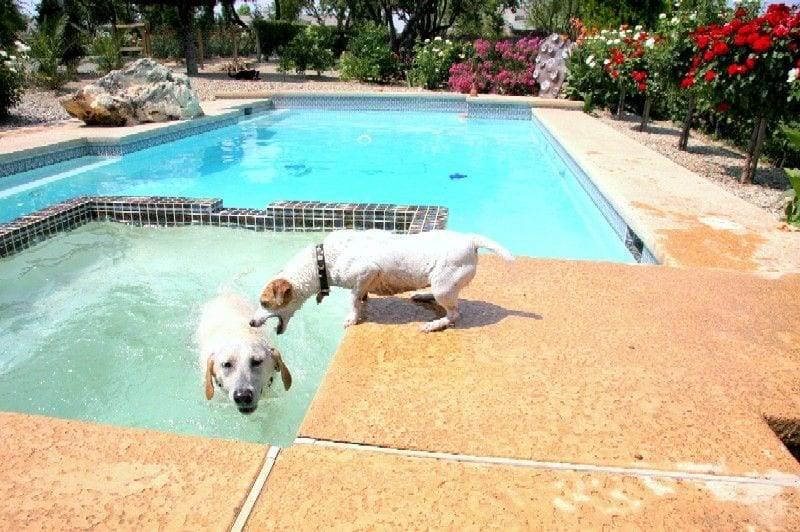 problem dog trainers
