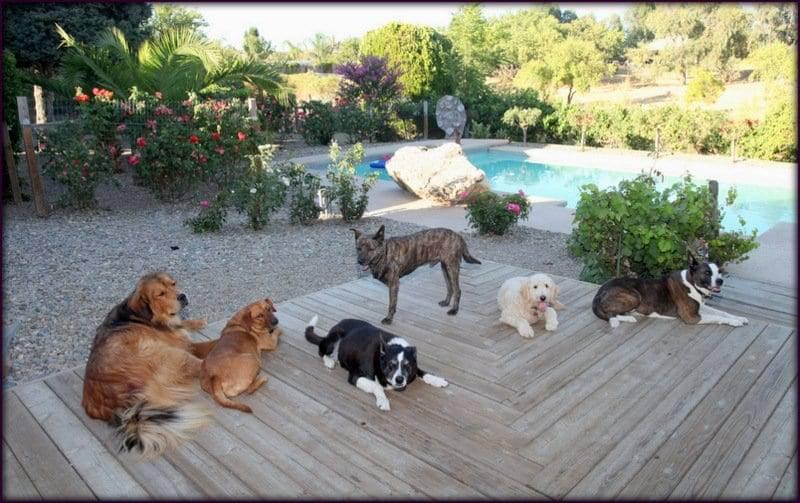 service animal sacramento