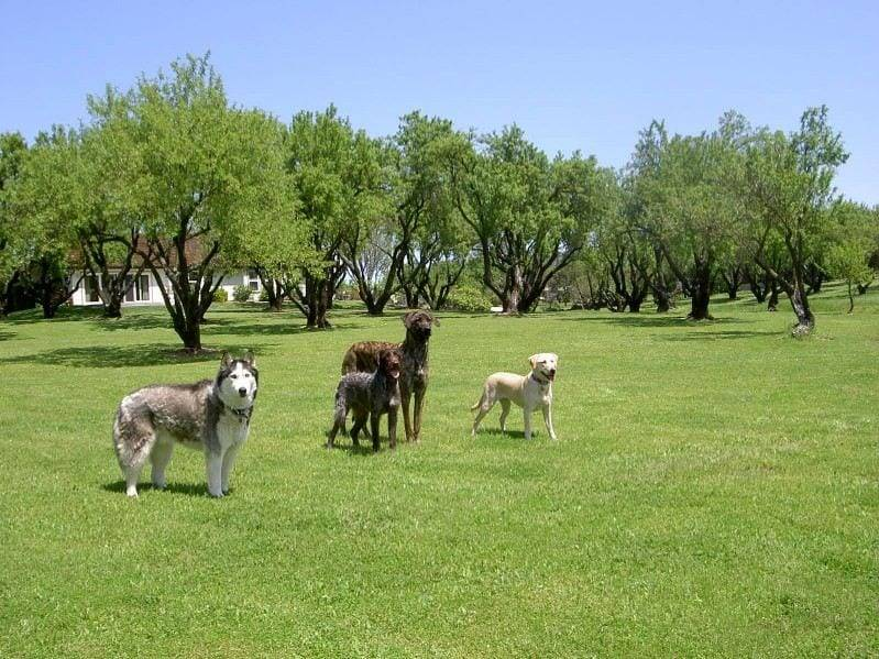 Dog Training California