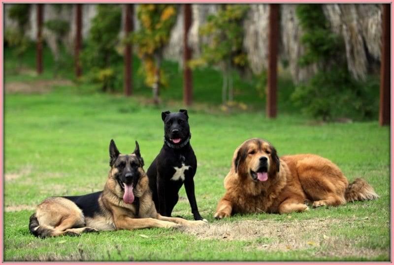 best dog training classes sacramento