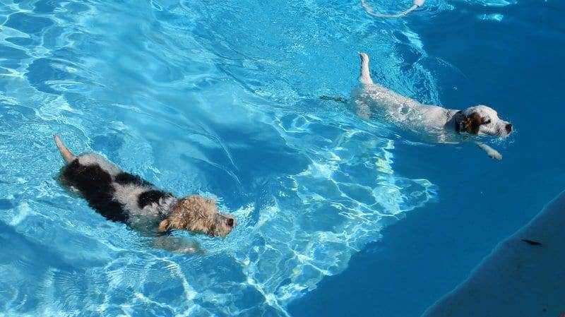 Dogs in the pool image