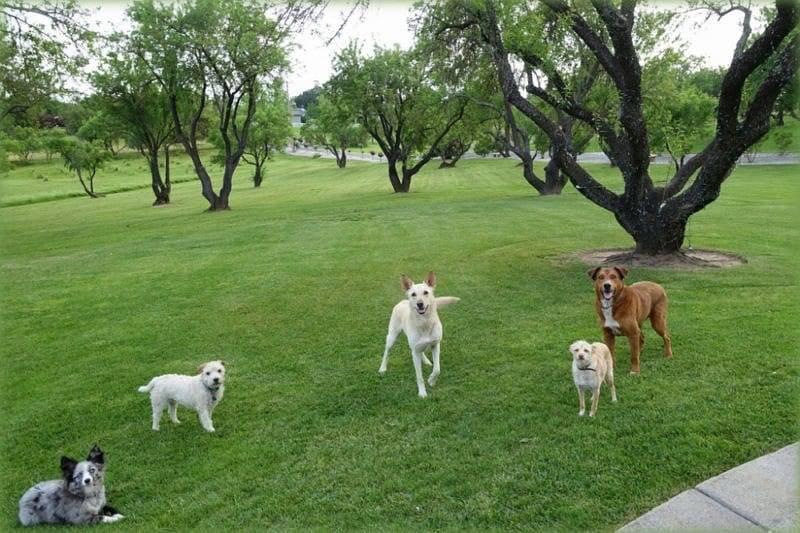 dog training grass valley