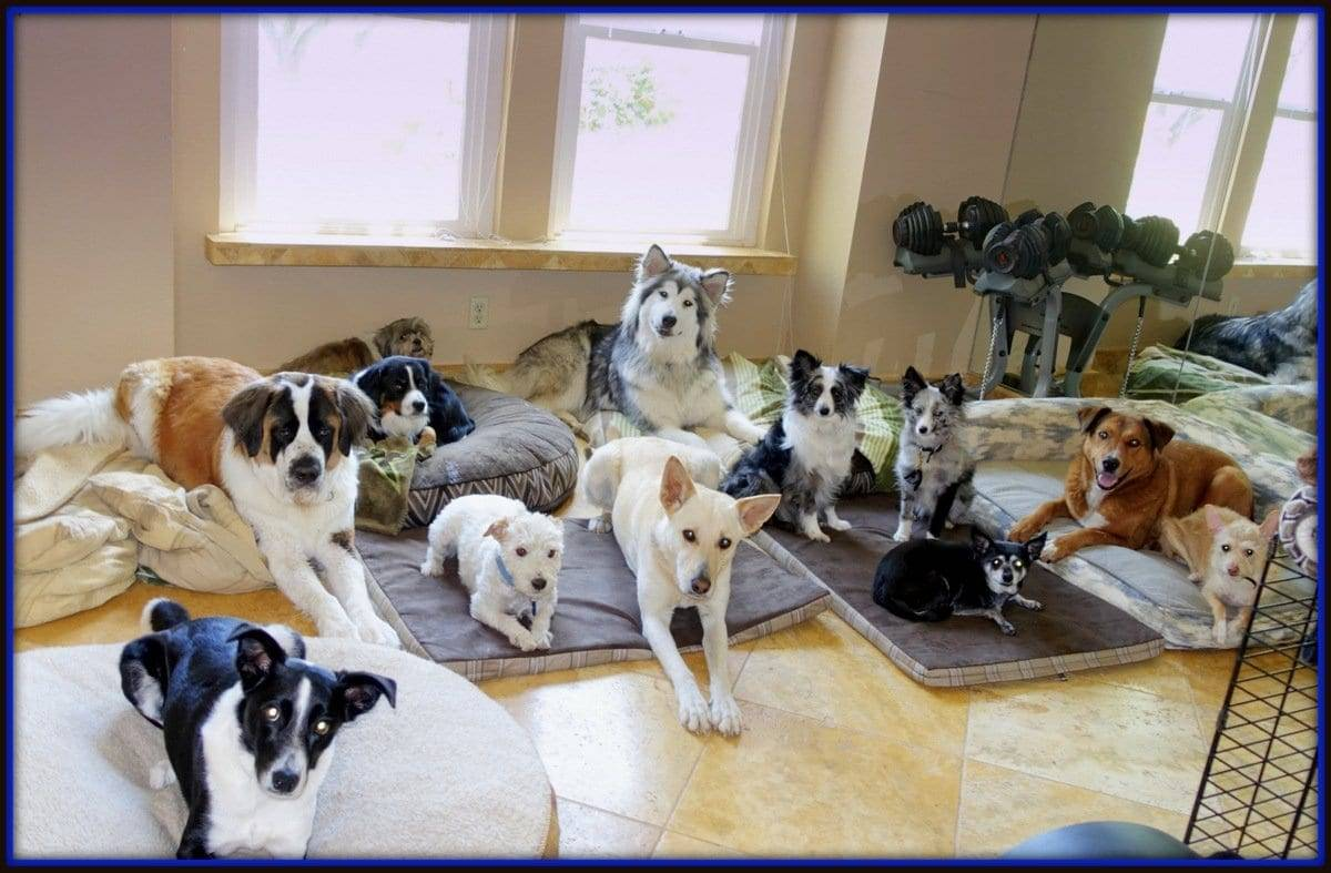 grass valley dog training