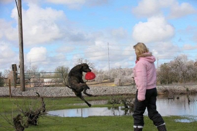dog training monterey