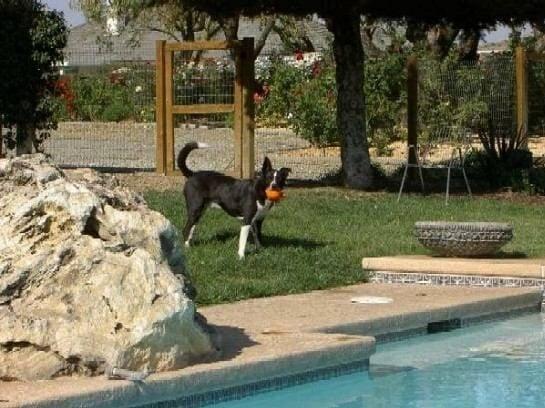 Dog rehabilitation Sacramento