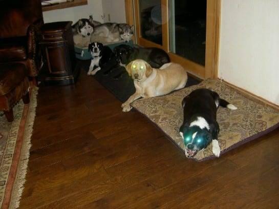 Terrified dogs in Sacramento.