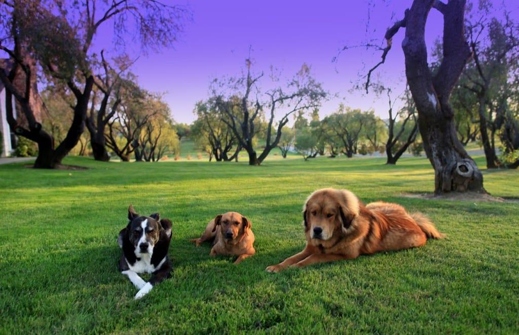 Dog boot camps sacramento