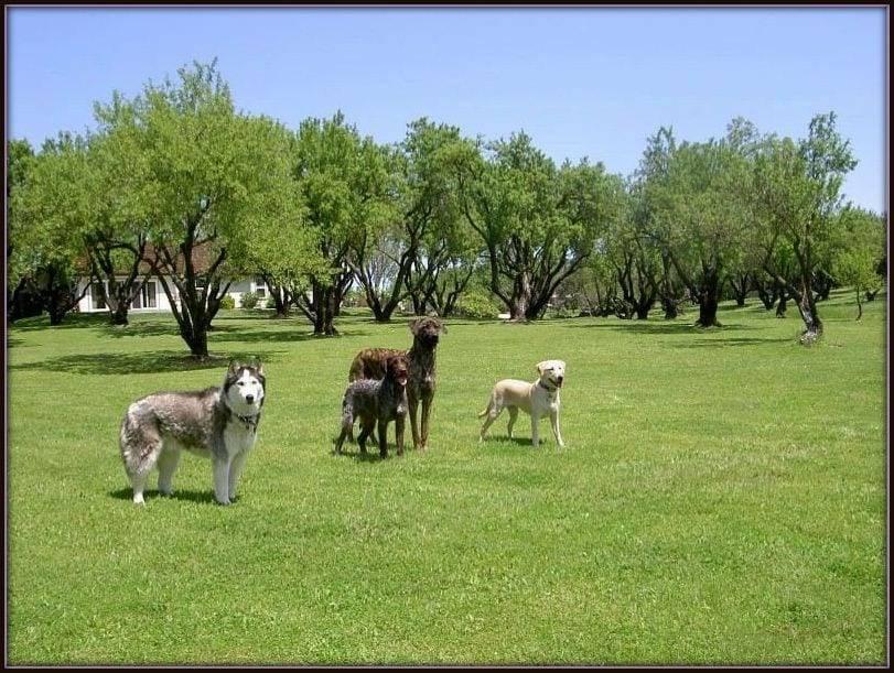 dog training in california