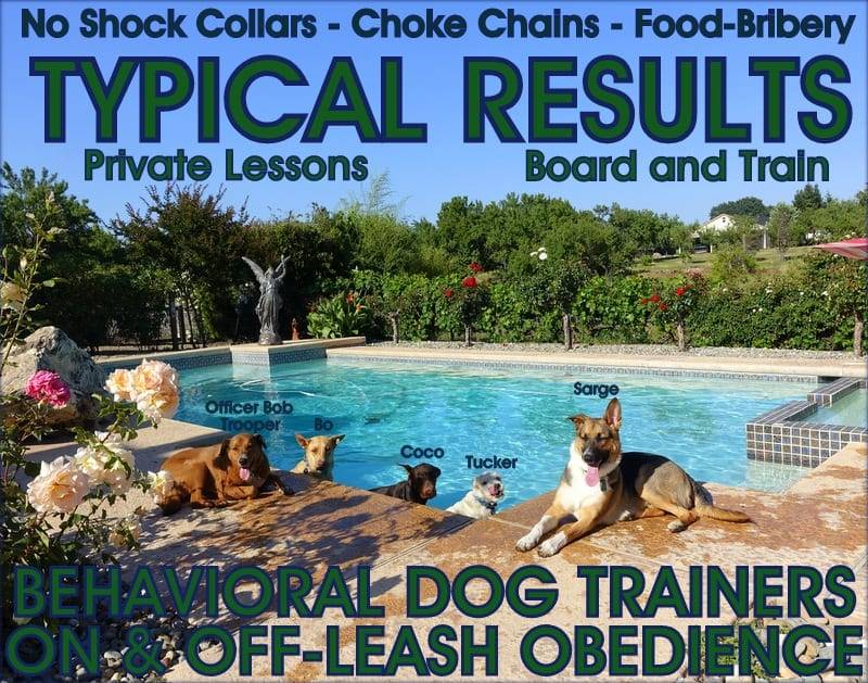 Dog Boarding Granite Bay CA
