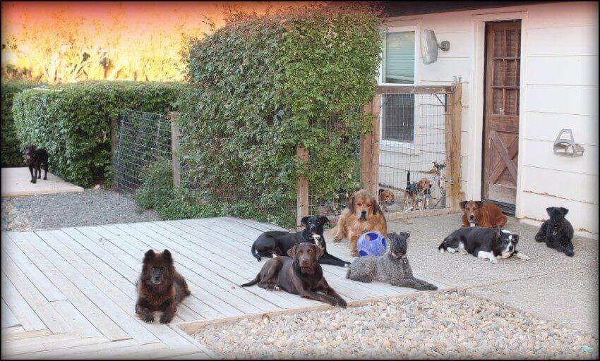 best family dog training sacramento