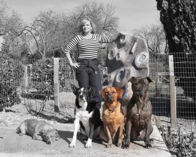 dog training n. california
