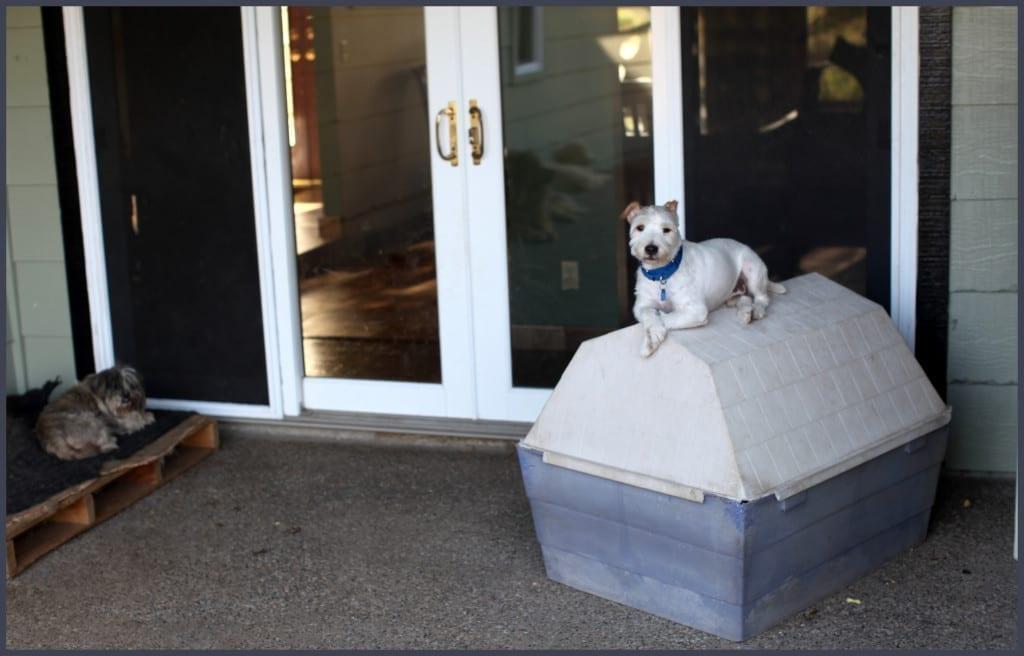 emotional support dog trainer