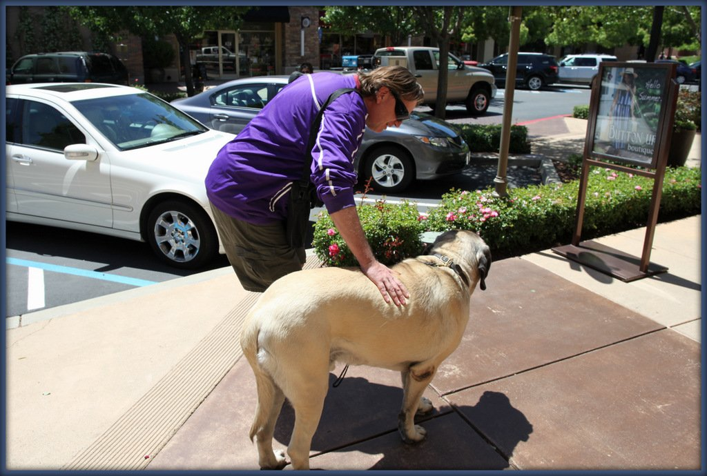 Emotional Support Animals in Sacramento
