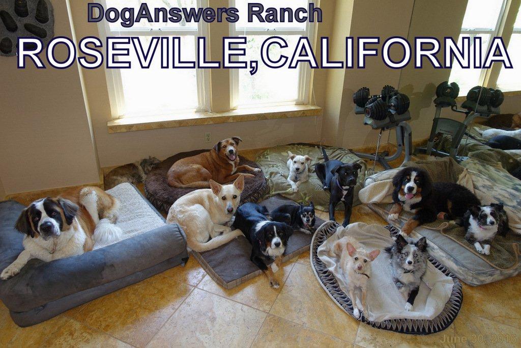 Service Dog Training in Sacramento