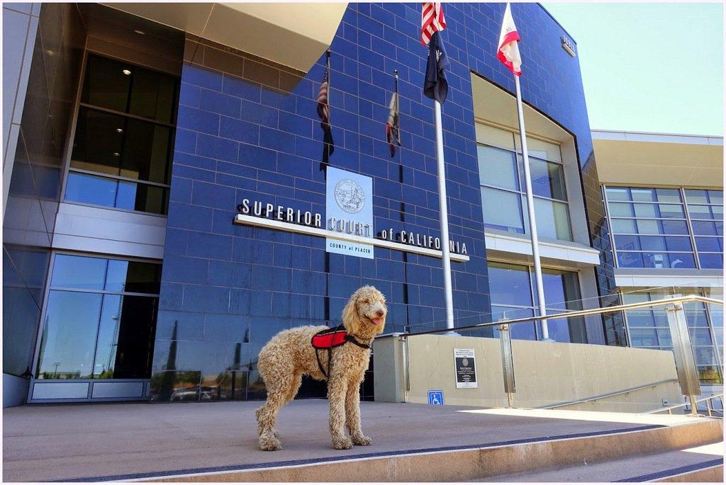 Service Dog Expert Witness