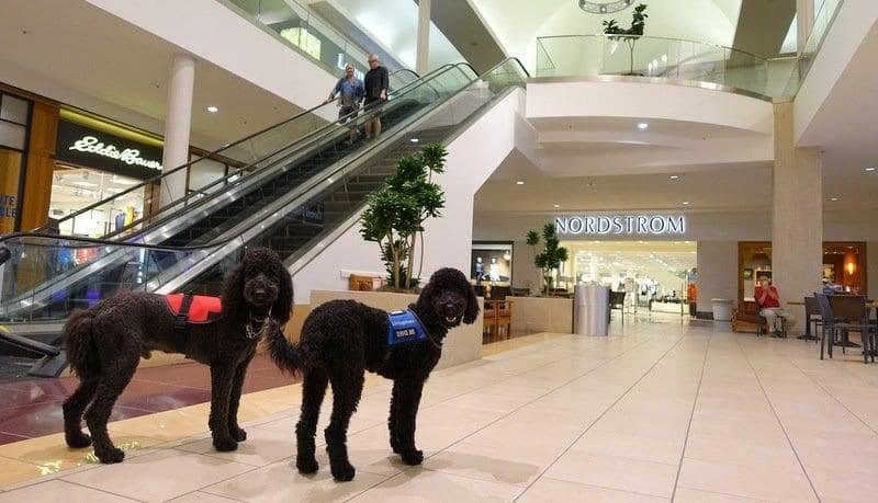 Service Dogs California