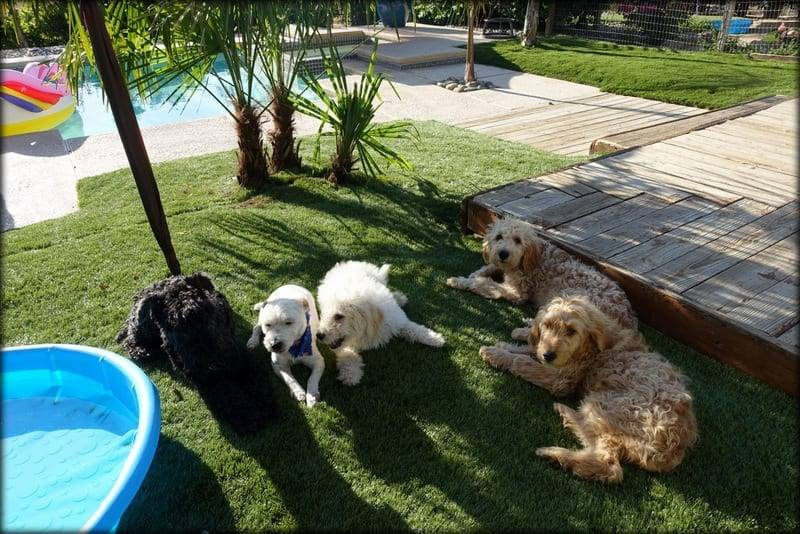 A dog training doggy boot camp in a home environment.