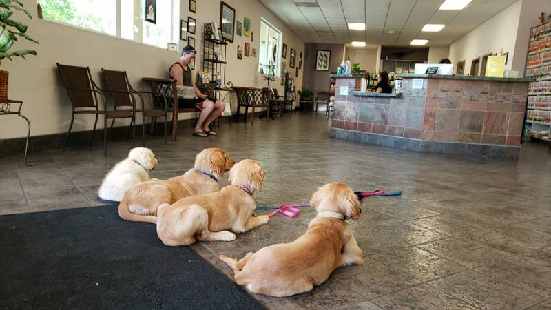 North Carolina service dogs for depression and anxiety
