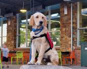 How To Get A Service Dog Or Emotional Support Animal