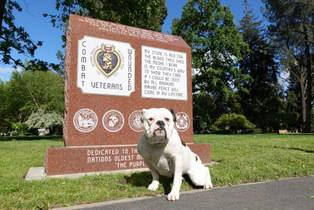 PTSD SERVICE DOG - PTSD DOG