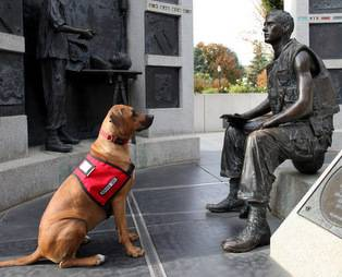 Psychiatric Service Dog, service dog for anxiety, anxiety service dog