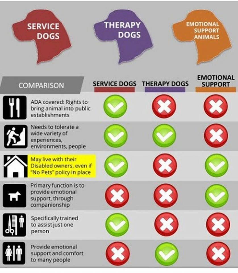service animals duty chart