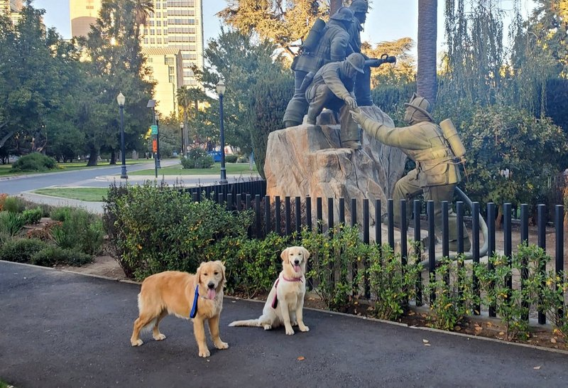 How much do service dogs cost?